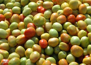 Дозревание зелёные томаты помидоры